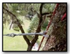 Gainesville Arborists