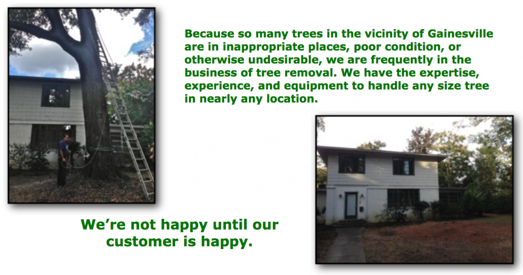 Gainesville Tree Removal Services