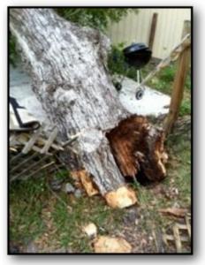 Tree Health