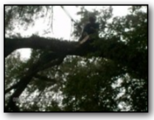 Tree Pruning Dead Wood Florida