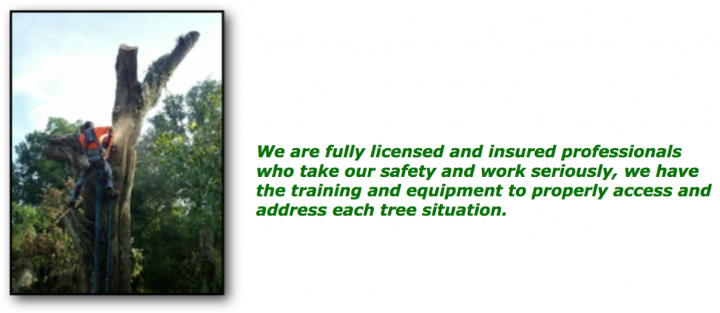 arborscape_licensed_insured_professionals